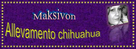 maksivon-banner-468px